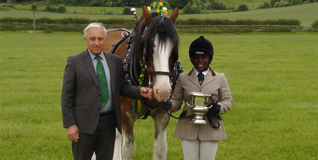 Shire Horse Team Success