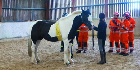Plumpton College teaches Merseyside firemen about rescue of large animals