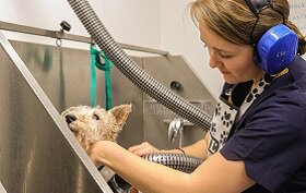 A Day in the life of a Dog Groomer at Plumpton College