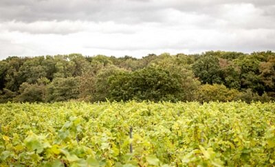 BOOM TIME FOR BRITISH VINEYARDS