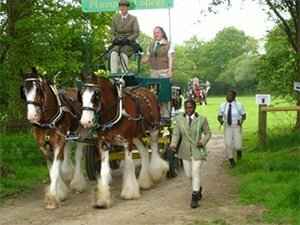 Plumpton College shire horses have their debut being driven as a pair