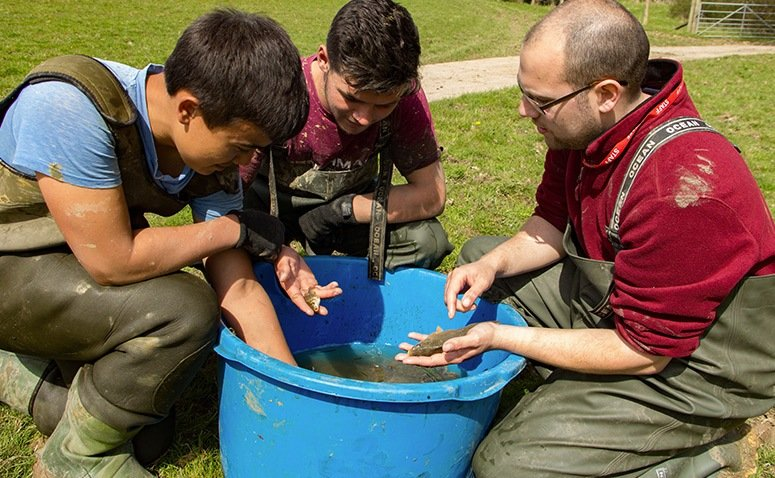 Three students handling a bucket of small fish